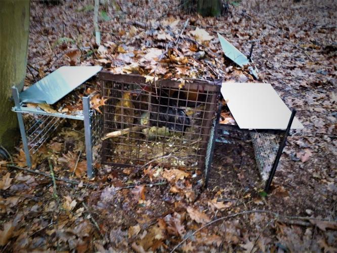 Afschuwelijke kooi met levende lokdieren.
