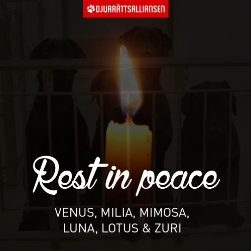 RIP Venus, Milia, Mimosa, Luna, Lotus en Zuri