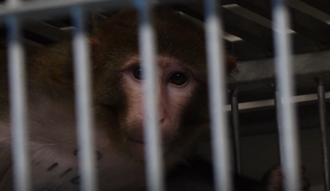 Foto uit het apenlab BPRC