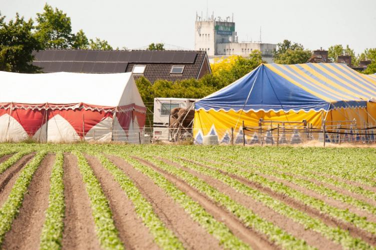 Circus Freiwald is gestrand in Beringe vanwege de coronacrisis.