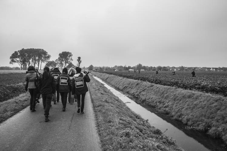 Archief Animal Rights: drijfjacht in de Hoeksche Waard.