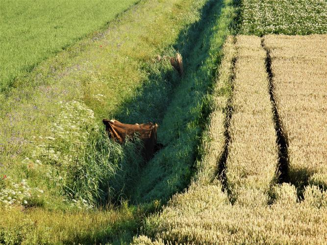 Aan de andere kant van de dijk zitten de jagers verstopt.