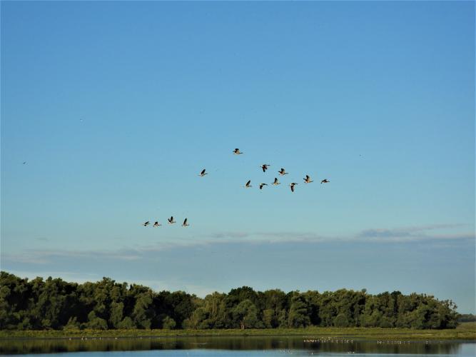 De Oeverlanden, Natura 2000 gebied.