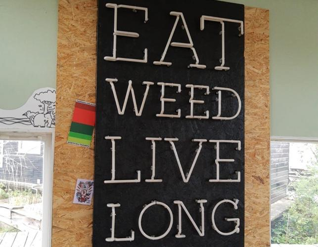 Eat weed live long