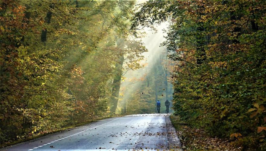 Op deze weg hebben zowel mens als dier weinig zicht.