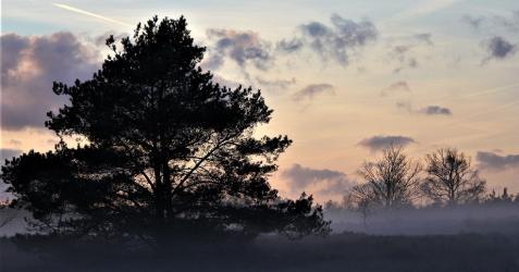 De Veluwe is aangewezen als Natura 2000-gebied.